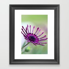 vibrant purple flower Framed Art Print