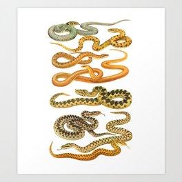 Snakes Art Print