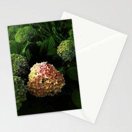 Natures Spotlight Stationery Cards