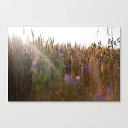 Wheat Dreams Canvas Print