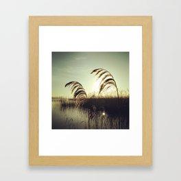 Reed fever Framed Art Print