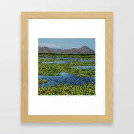 Palo Verde Collectios Framed Art Print
