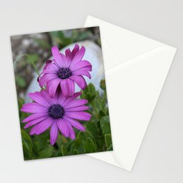 Purple and Pink African Daisy Flowers Stationery Cards