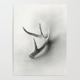 Lost and Found - Deer Antler Pencil Drawing Poster
