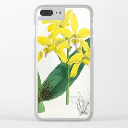 Laelia Xanthina Vintage Yellow Lindenia Orchid Clear iPhone Case