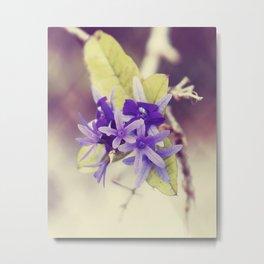 Cloaked in Purple Metal Print