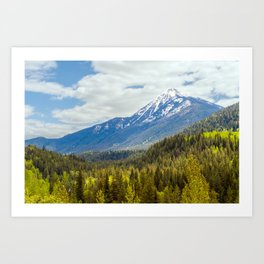 Colorful forest of British Columbia - Canada Art Print
