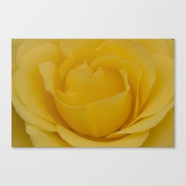 Delicate Yellow Rose Fine Art Photo Canvas Print