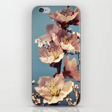 fulgor iPhone & iPod Skin