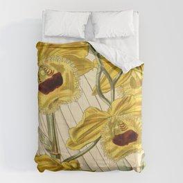 Dendrobium fimbriatum (as Dendrobium fimbriatum var. oculatum) Curtis' 71 (Ser. 3 no. 1) pl. 4160 ( Comforters