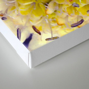 Flower Purple Yellow Canvas Print