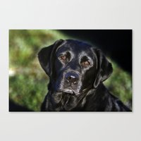 labrador Canvas Prints featuring Labrador by The Time Catcher