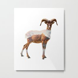 Mountain Sheep Metal Print