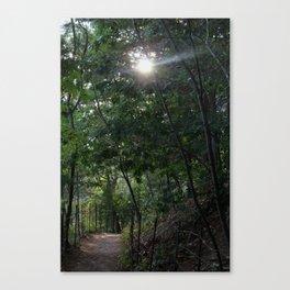 Walden Pond Trail Canvas Print