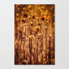 Sunflower Heads in the Winter Sun Canvas Print