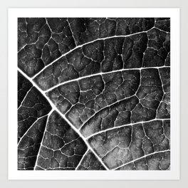 LEAF STRUCTURE no2a BLACK AND WHITE Art Print