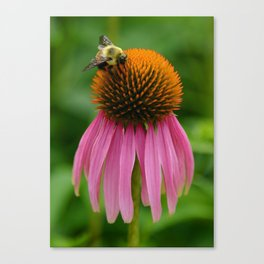 Coneflower with Bee Canvas Print