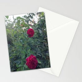 Huntington Roses: I Stationery Cards