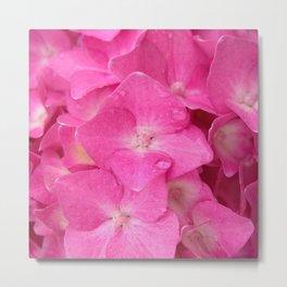 hydrangea bloom Metal Print