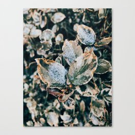 Spring is coming, but winter is here Canvas Print