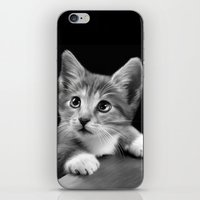 kitten iPhone & iPod Skins featuring Kitten by Julie Hoddinott