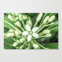 sisters Canvas Prints featuring Sisters by Loredana