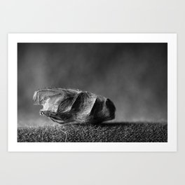 wrapped up fly Art Print
