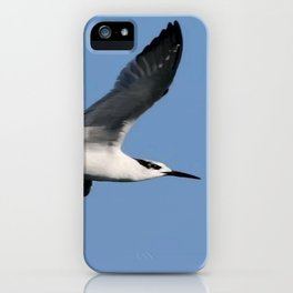 Sandwich Tern In Flight Vector iPhone Case