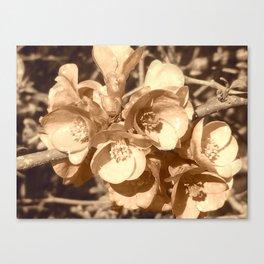 Jolies fleurs de mars en sépia Canvas Print