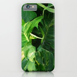 Exotic Hawaiian Jungle Leaves, Lush and Lavish iPhone Case