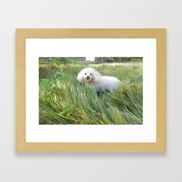 A Smiling Dog Looking At Her Friend Framed Art Print