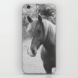 Horse III _ Photography iPhone Skin