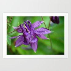 Lovely purple Art Print