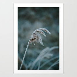 Frosted Grass I Art Print