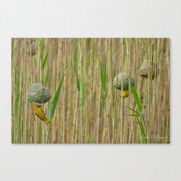 Golden Weavers Canvas Print