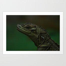 Philippine Sailfin Lizard Art Print