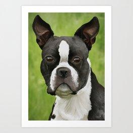 Yoda Pet Portrait Art Print