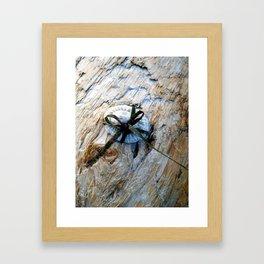 Seashell Present Framed Art Print