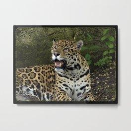 The Jaguar Metal Print
