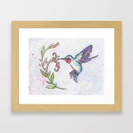 Winsome Hummingbird Framed Art Print