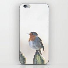 Robin iPhone & iPod Skin