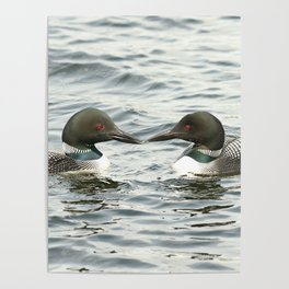 Loon Lovers Poster