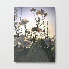 Matilija Poppy Garden Metal Print