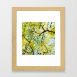 Willow Canopy Framed Art Print