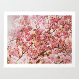 Beautiful Bundles Of Pink Cherry Blossoms In Full Bloom Japanese Sensibility Art Print