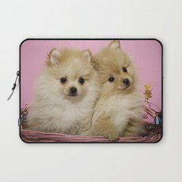 Pink Pomeranian Brothers Laptop Sleeve