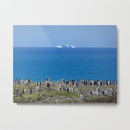 King Penguins in front of an iceberg Metal Print