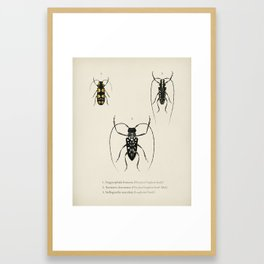 Different types of insects illustrated by Charles Dessalines D' Orbigny (1806-1876) 28 Framed Art Print