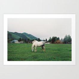 Wild Horse (35mm Film) Art Print
