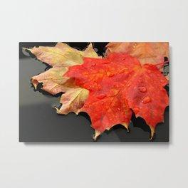 """Colorful Fall"" By Jade Sweeney Metal Print"